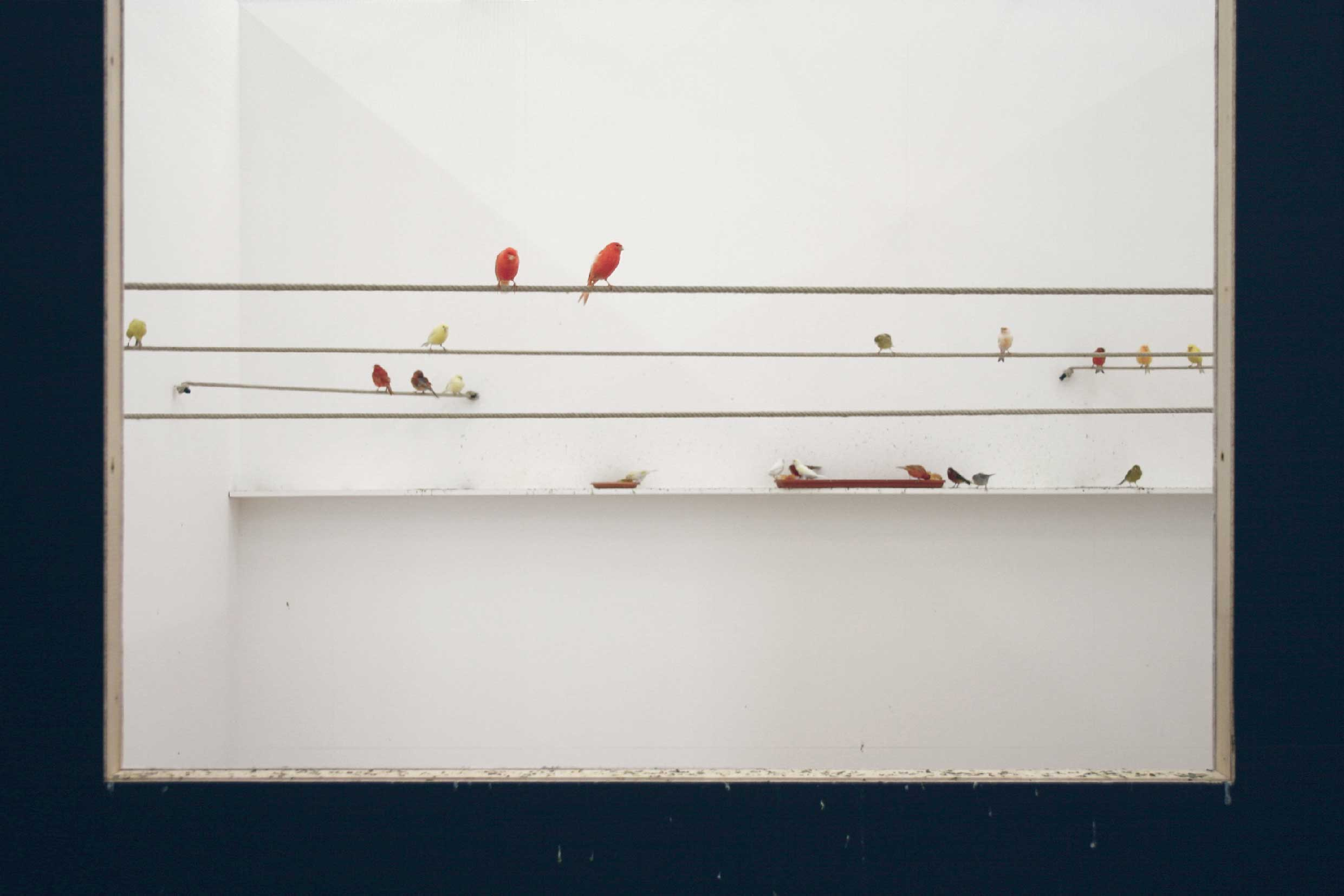 alex-hanimann-installation-birdwatching-ii-1