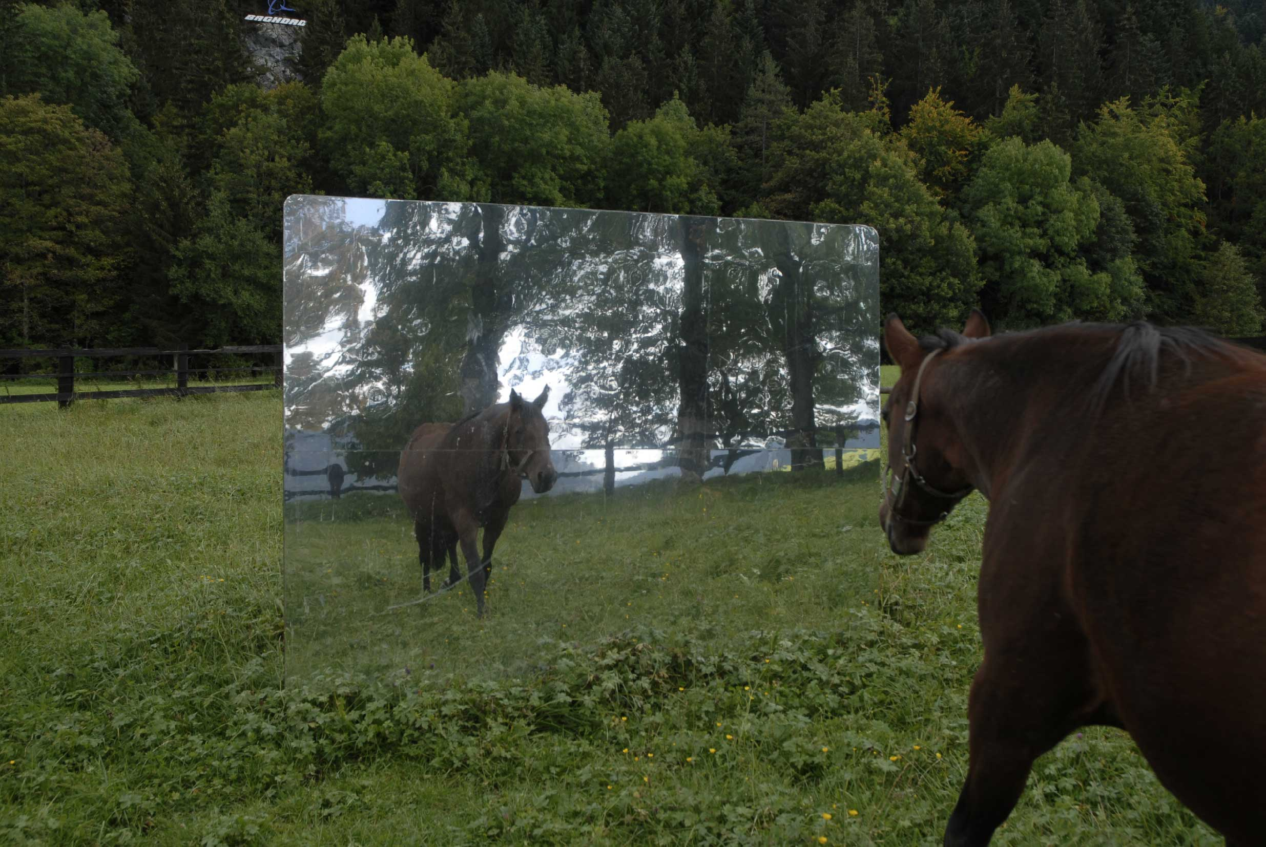 alex-hanimann-installation-horsewatching-15